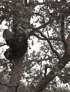 wrenbird